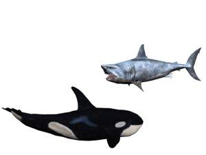 orca shark 3D model