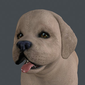 3D rigged dog standing