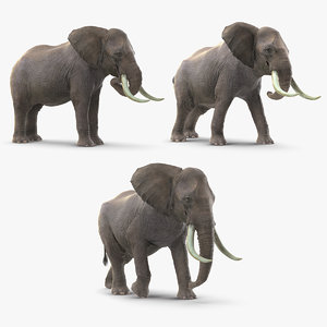 elephants mammal animal 3D model