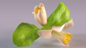 orange lemon lime flower 3D model