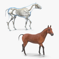 Horse and Skeleton Rigged Collection for Maya