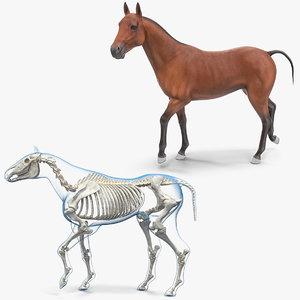 3D horse skeleton rigged model