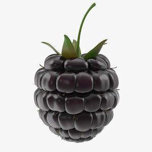 3D fresh blackberry