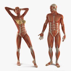 male female muscular anatomy 3D model