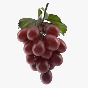 3D bunch fresh red grapes model