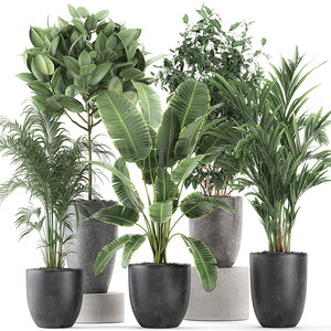 decorative plants interior flowerpots 3D