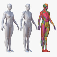 Character - Female Anatomy Body Base HighPoly