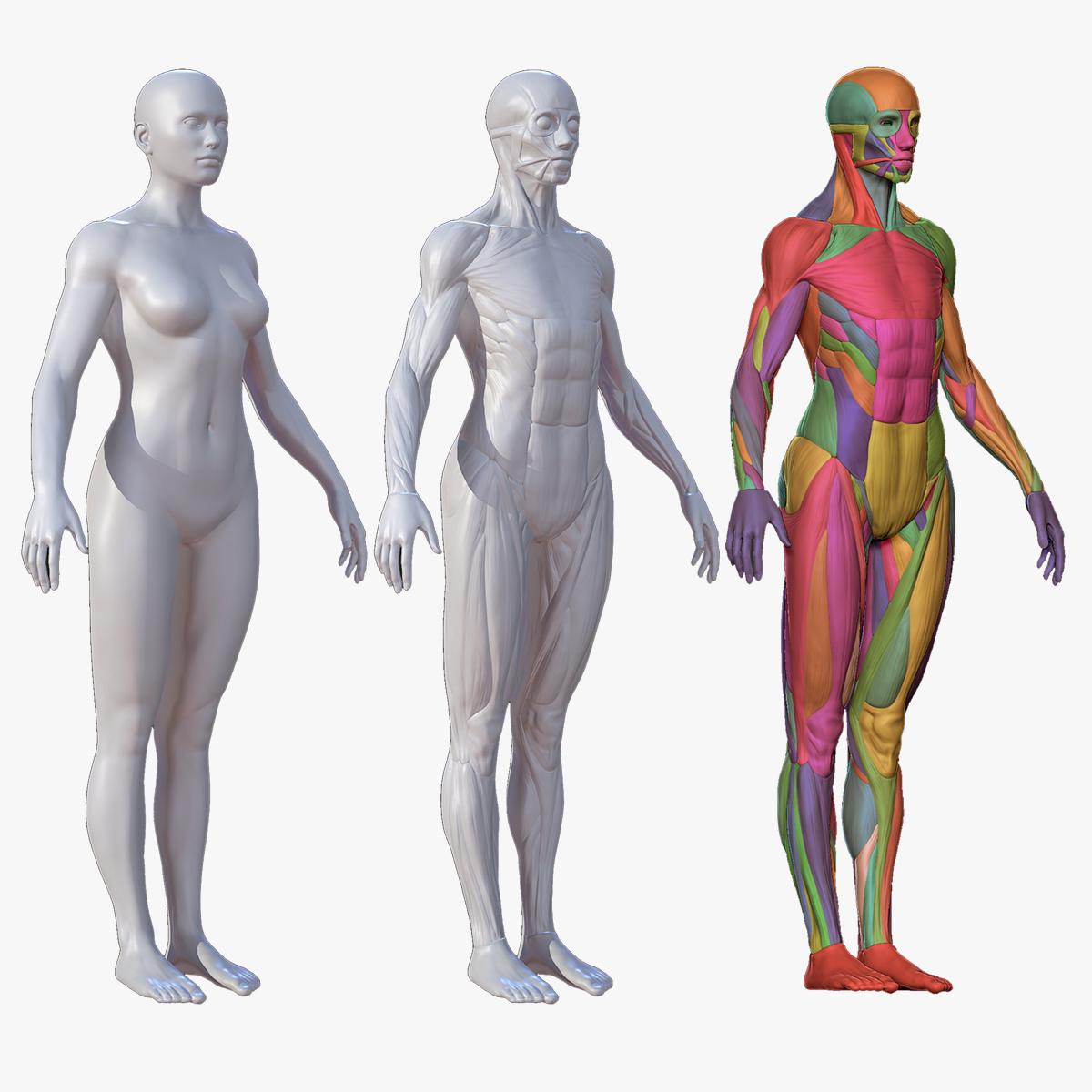 3D model character female anatomy body