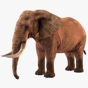 3D elephant realistic model