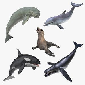 3D marine mammals rigged 4