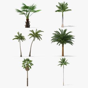 3D palms 3