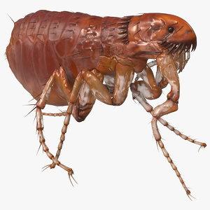 3D flea walking pose model