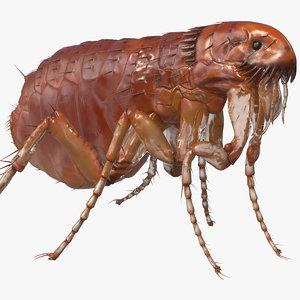 flea standing pose model