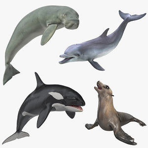3D marine mammals rigged 4 model