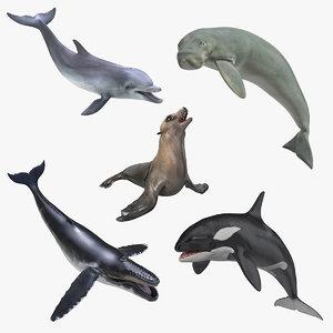 marine mammals rigged 4 3D