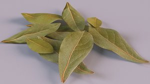 bay leaf spice 3D model