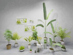 indoor plants pots 3D model