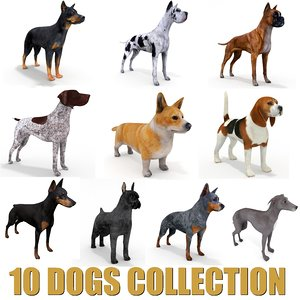 10 dogs 3D