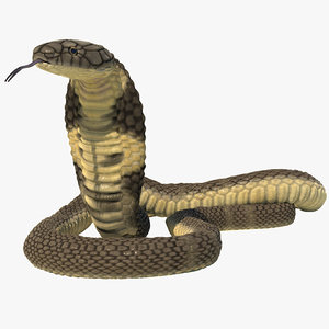 3D model rigged king cobra snake animation