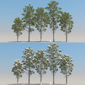 3D model 5 pinus canariensis tree leaves