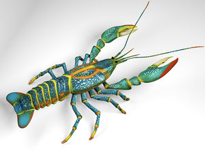 australian fresh water crayfish 3D