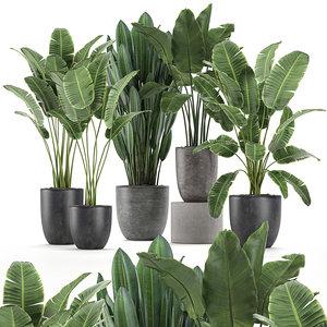 decorative plants interior flowerpots 3D