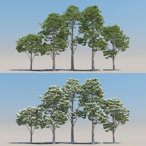 5 pinus sylvestris 3D model