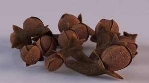 3D clove spice model
