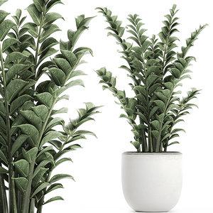 3D decorative pots interior zamioculcas model