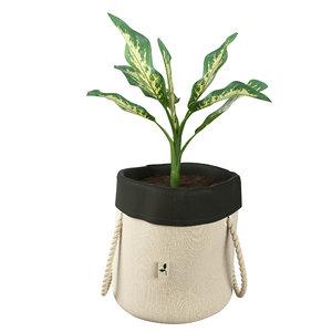 plant dieffenbachia model