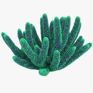 coral 5 s 3D model