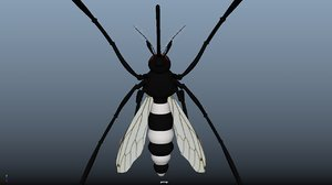 3D mosquito insect