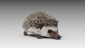 3D hedgehog animations