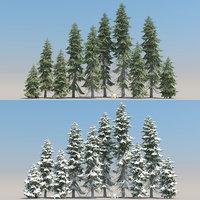 10+10 Picea Engelmannii Trees