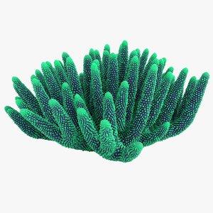 coral 5 m model