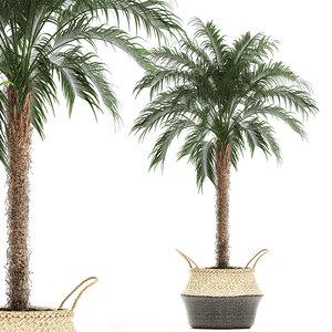 decorative palm tree basket 3D