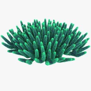 coral 5 l 3D