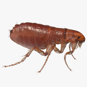flea insect rigged modo model
