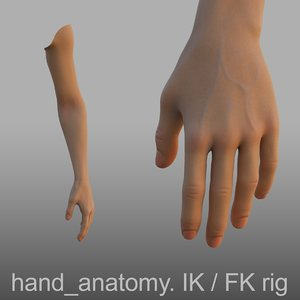 3D hand anatomy model