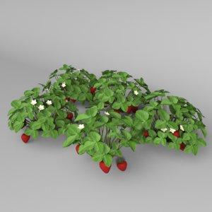 strawberry plants berry 3D