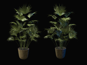palm nature tree plant 3D model