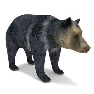 bear anime 3D model