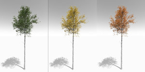 3D quaking aspen tall mature