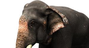 asian elephant rig 3D model