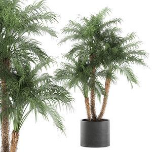 decorative palm trees black 3D model