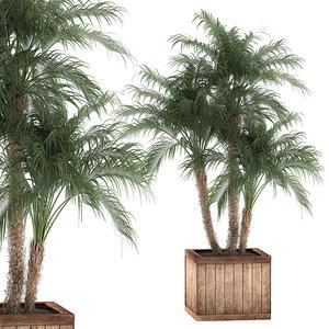 decorative palm phoenix roebelenii 3D model