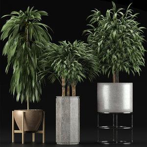 plants 12 3D model