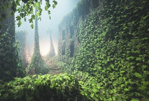 3D ivy plants games