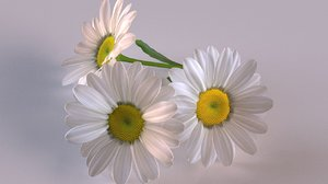 chamomile daisy flower model