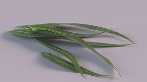 eucalyptus tree medicine model